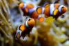 osceanopolis poissons